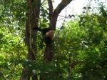 Rio Tempisque_Mono Capuchino